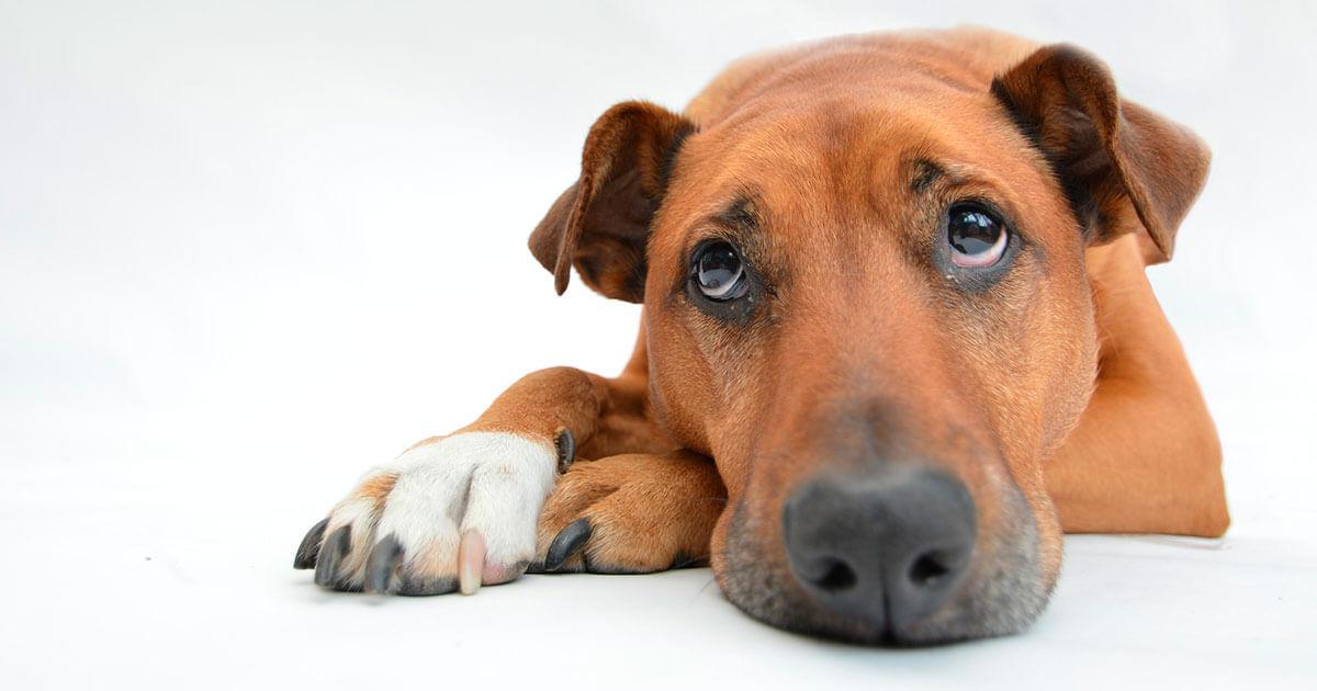 Legislação para Animais de Companhia